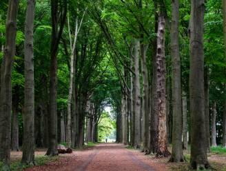 Moeten de bomen van de dreef wijken of niet? Info-avond met drie experten geeft tekst en uitleg