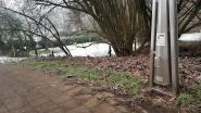 Hondenpoepzuilen zijn een succes: extra zuilen op zeven locaties in Halle