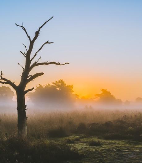 Maatregelen tegen effecten stikstofuitstoot op Strabrechtse Heide in Heeze: Steenmeel en grazende schapen