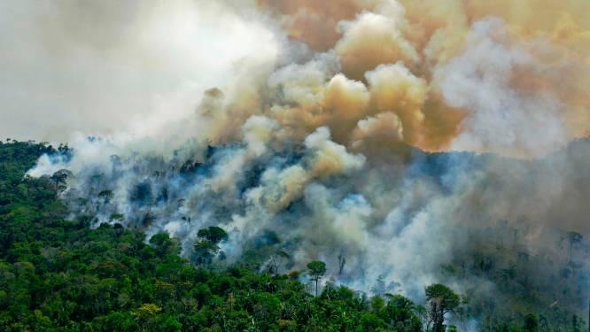 Amazonewoud stoot al tien jaar meer CO2 uit dan het absorbeert