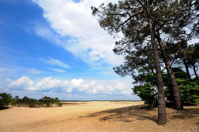 Loon op Zand, met zijn Loonse en Drunense Duinen, is uitgeroepen tot mooiste wandelgemeente.