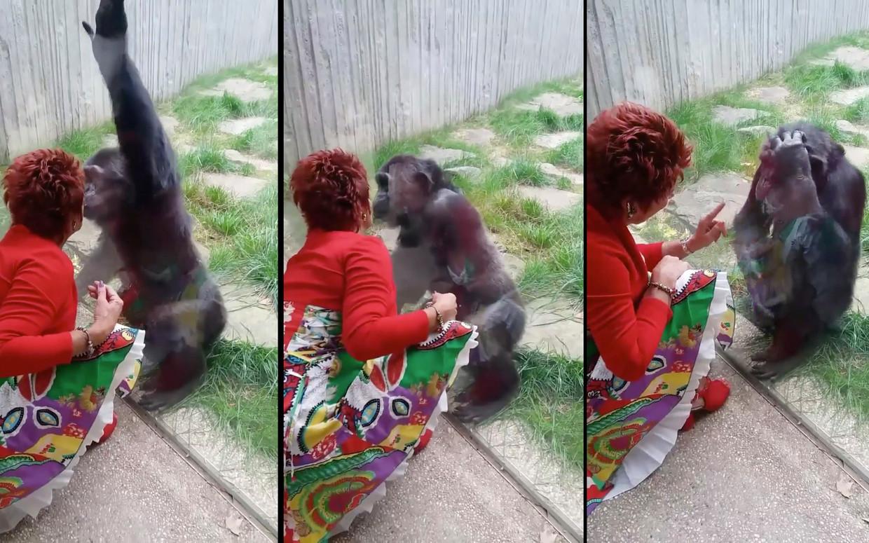Adie en chimpansee Chita Beeld RV