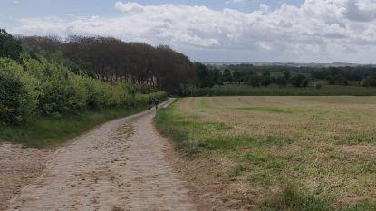 Opvallend veel ongevallen met fietsers en motorrijders in Limburg