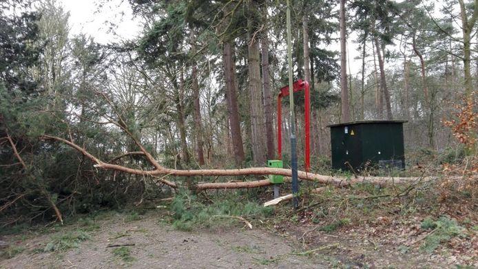 Aan de Braakweg in Stiphout is een boom omgewaaid die de gehele weg blokkeert.