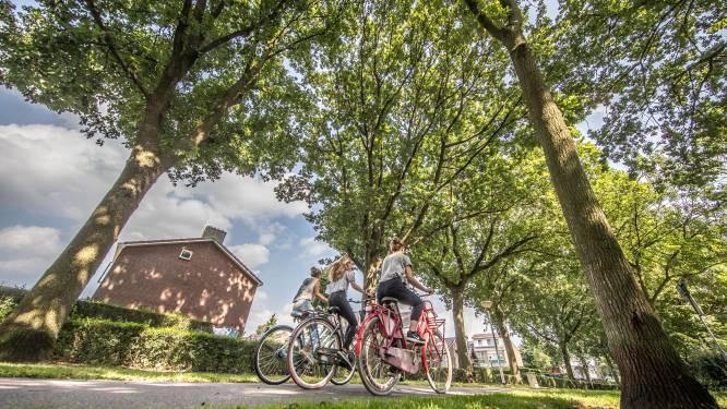 Gemeente Zwolle volhardt: ergernis-eiken moeten plat