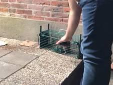 In brand gestoken rat leidt tot woedende reacties in Oldenzaal