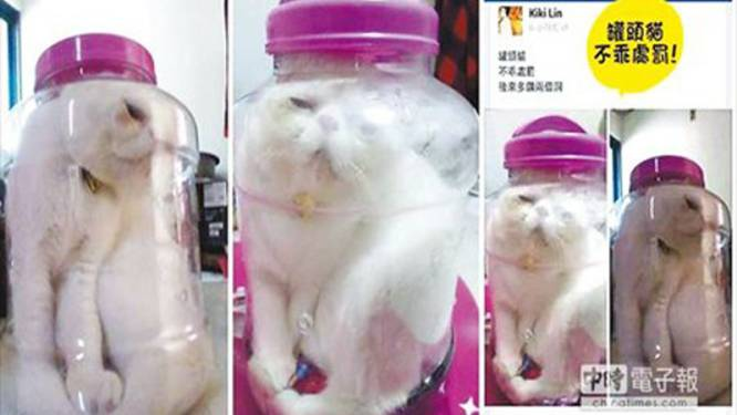 Kat in bokaal ontketent storm van protest op het net