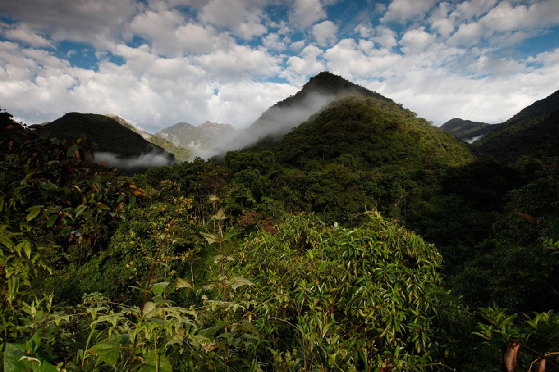 Tal van vogelsoorten zijn niet meer te vinden op de Cerro de Pantiacolla in de Andes. Beeld rv