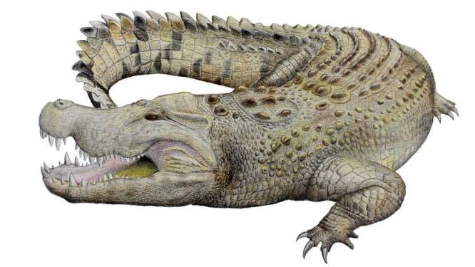 Schedel krokodil van 8 miljoen jaar oud blijkt nu van nog niet ontdekte uitgestorven soort te zijn
