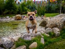 Speeltuin voor zwerfhonden in Vlaardingen