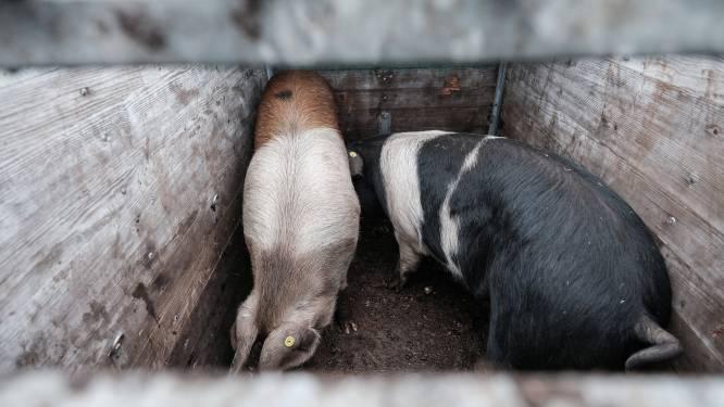 Bon Vivant na 34 jaar failliet: geen Natuurlijk Scharrelvlees uit de Achterhoek meer