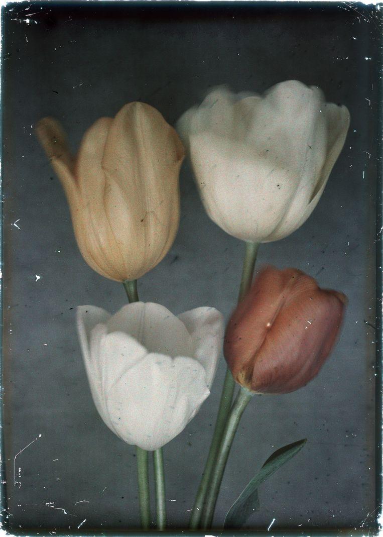 Voorbeeld van vroege kleurenfotografie volgens het autochroomproces, omstreeks 1930. Beeld Nationaal Archief/Collectie Spaarnestad/Leendert Blok