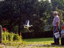 De ooievaars keren elk jaar terug in de tuin van Wim en Sijke Donks