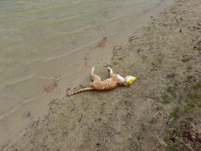 Een jonge kat is overleden toen hij met zijn kopje vast kwam te zitten in een lege chipszak bij recreatieplas Hilgelo.