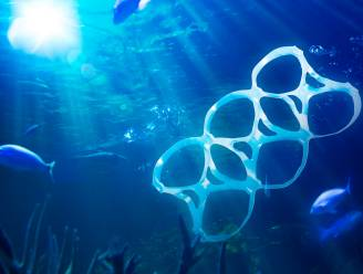 Zelfs zeewezens op extreme diepte hebben nu plastic in de maag