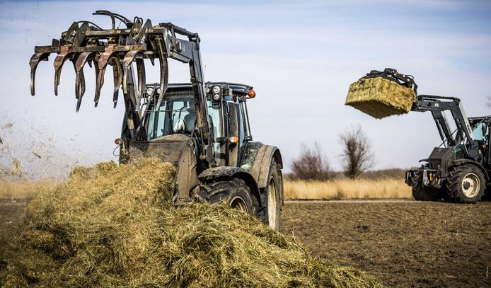 Beeld van het bijvoeren van de grote grazers in de Oostvaardersplassen.