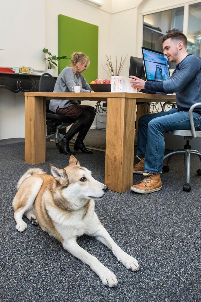Irrpa bij communicatiebureau Blixen in Breda.