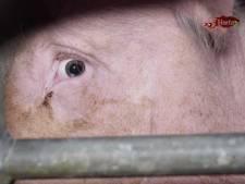 """""""Le (dé)goût des choses simples"""": Herta accusée de maltraitance animale au sein de ses élevages"""