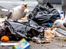 Anti-meeuwenbakken moeten einde maken aan hondsbrutale roof- en snaaimeeuwen