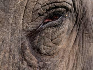 Onderzoek naar 18 doodgebliksemde olifanten in India