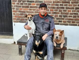 """Voorzitter Glabbeekse hondenschool GHS vreest voor trouwe viervoeters die tijdens pandemie in huis werden gehaald: """"Wat als baasjes straks weer werken gaan en beseffen dat ze eigenlijk geen tijd hebben?"""""""