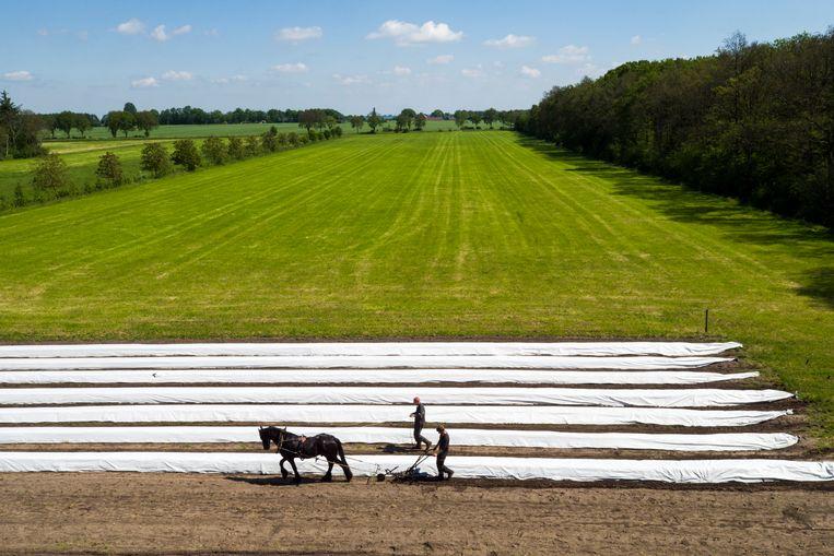 Twee Friese boeren, ploegend op hun akker in  Gaasterland.   Beeld Getty Images