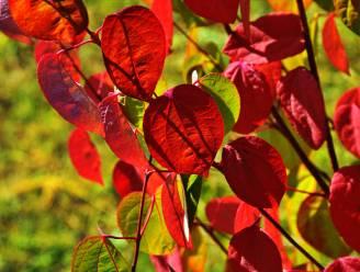 Herfstbomen die eigenlijk te mooi zijn om te beschrijven