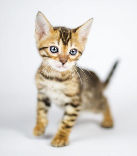 Kittens kruipen door kier en komen vast te zitten achter muur