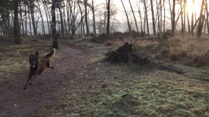 Derde Lommelse hondenlosloopzone geopend in Kattenbos
