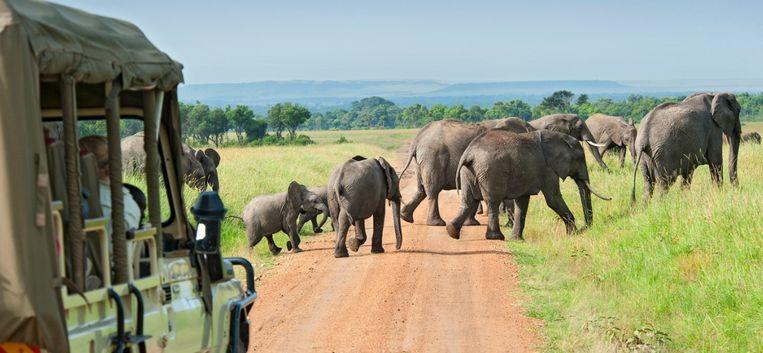 """Claudia werd aangevallen door een olifant: """"Zijn slagtanden boorde rakelings achter mij langs de auto in"""""""