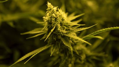 Dakloze man betrapt met ruim 8 kilo cannabis
