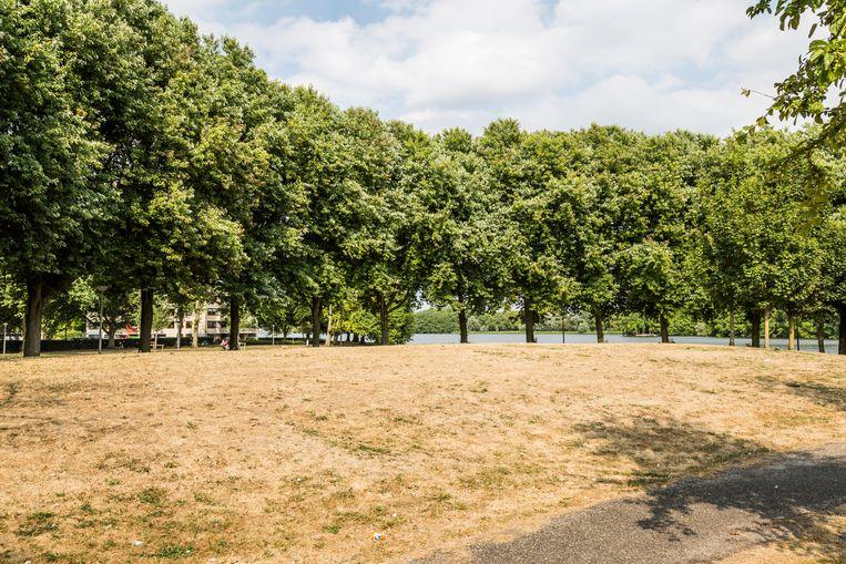 De hitte sloeg in 2018 genadeloos toe en leidde tot verdorde grasvelden, zoals hier bij de Sloterplas. Beeld Van Nerum Tammy