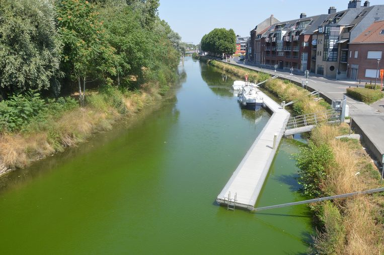 Ook vorig jaar kleurde de Dender in Ninove al groen door algen.