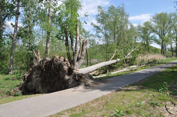 Deze boom viel naast het pad en vormt dus geen onmiddellijk obstakel voor voorbijgangers.