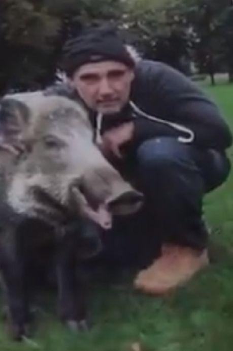 Un sanglier domestique abattu à bout portant par un chasseur: la vidéo à l'origine du tollé