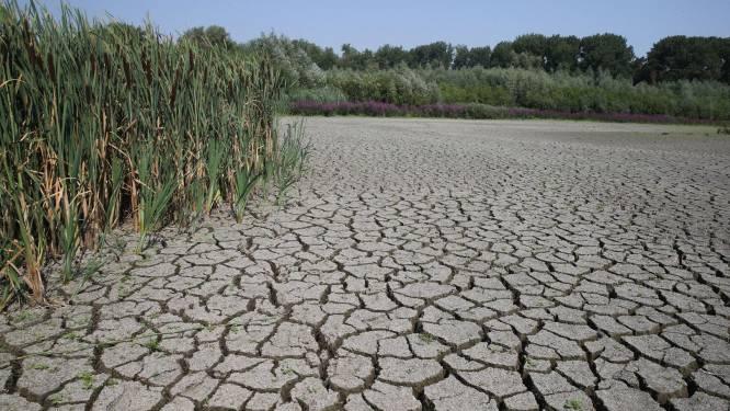 Stad Gent laat grootschalige droogtestudie uitvoeren: zo wapenen we ons tegen klimaatopwarming