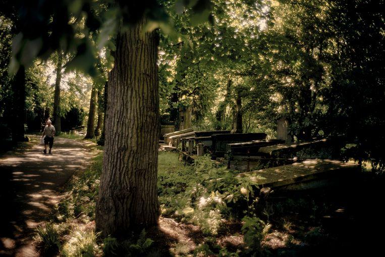 De Westerbegraafplaats in Gent, waar een 14-jarig meisje verkracht werd door vijf jongens. Beeld Eric de Mildt