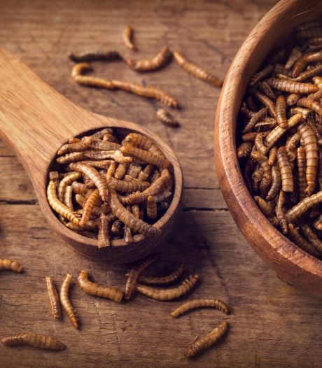 Bientôt des insectes dans notre assiette?
