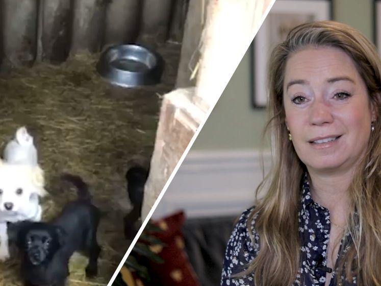 Malafide hondenfokkers: 'Sommige handelaren verkopen meer dan 3000 puppies per jaar'