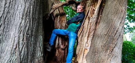 Haalt de Amerongse Makke Janne brons in boomverkiezing?