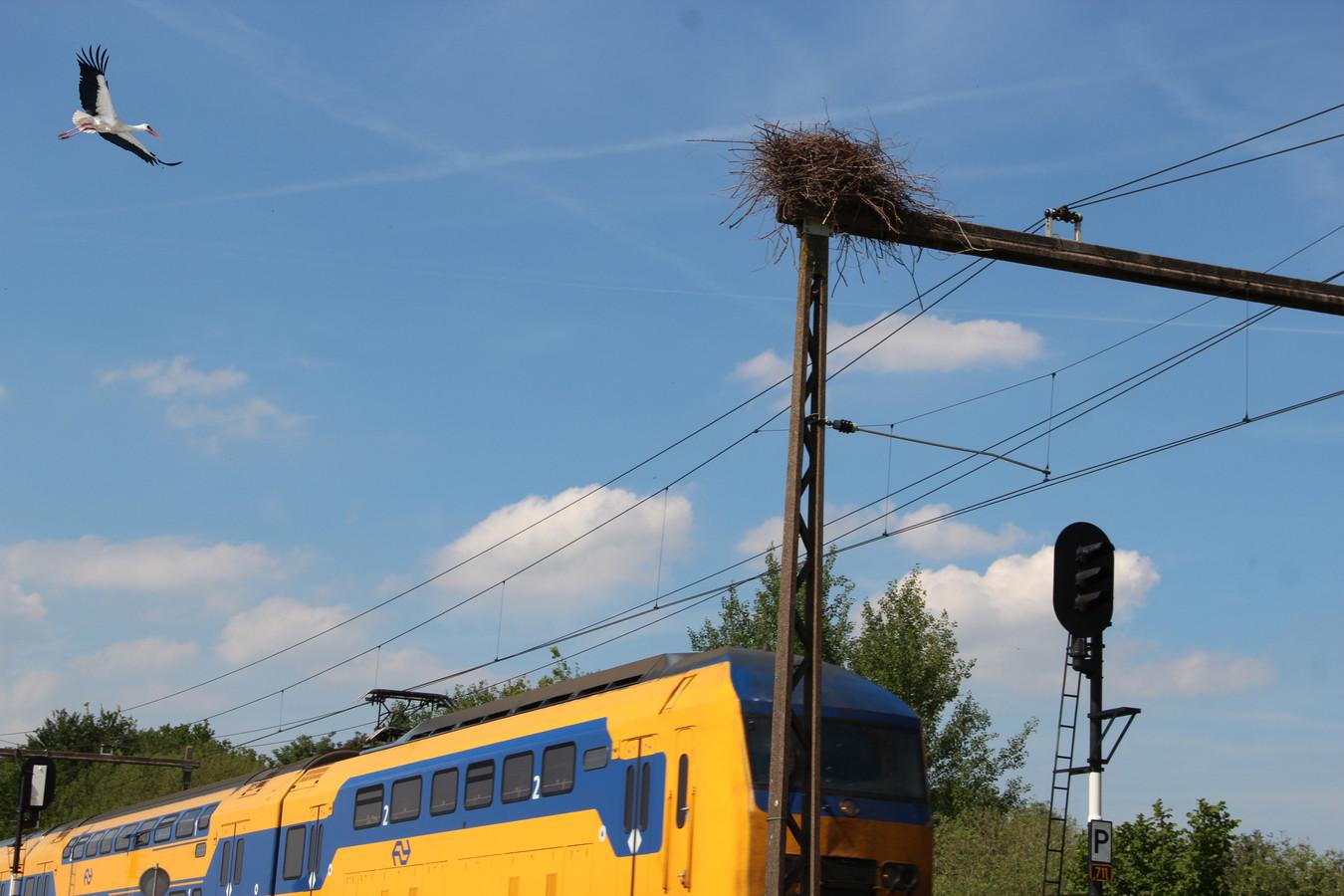 Ooievaar landt op bovenleiding van de trein