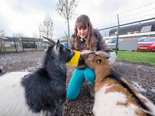 Eline Spoelder met enkele geiten