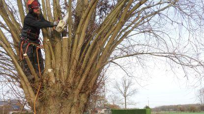 Extra knotters gezocht om bomen te snoeien: gratis cursus voor beginners en gevorderden