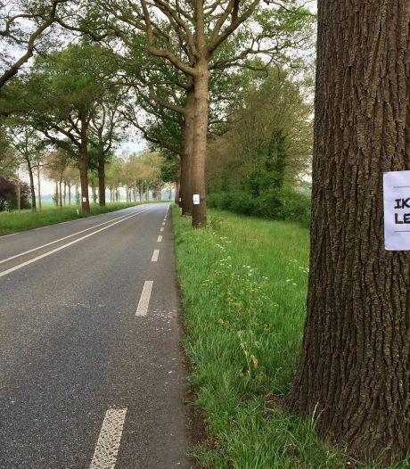 Gelderland wil met maatwerk bomen langs N-wegen sparen