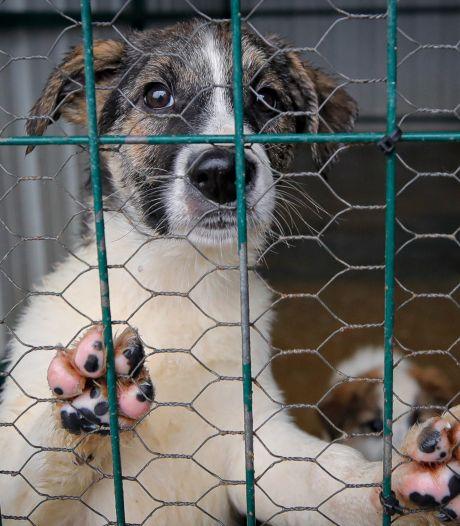Chats et chiens peuvent aussi être testés en Corée du Sud