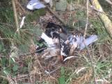 30 beschermde, dode vogels gedumpt in natuurgebied bij De Heen: 'Ik snap hier niets van'