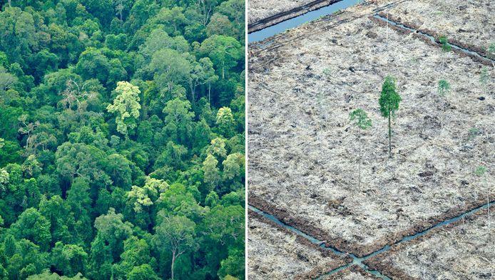 Ontbossing op het Indonesische eiland Sumatra.