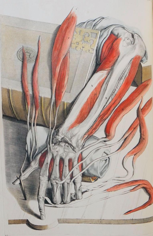 Illustratie uit de anatomische atlas van Govert Bidloo Beeld