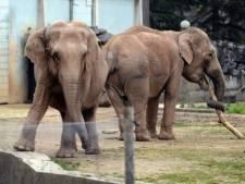 Les éléphantes de Lyon épargnées, Bardot soulagée
