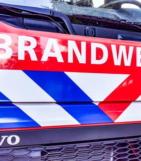 Duikers van de brandweer redden gans uit grote kunstvaas in Schiedam